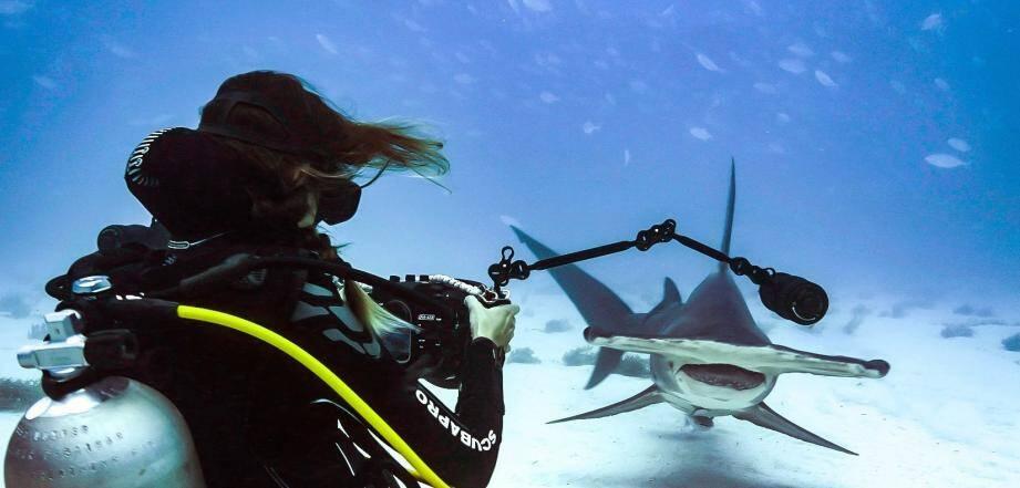 Cyrielle face au grand requin marteau.