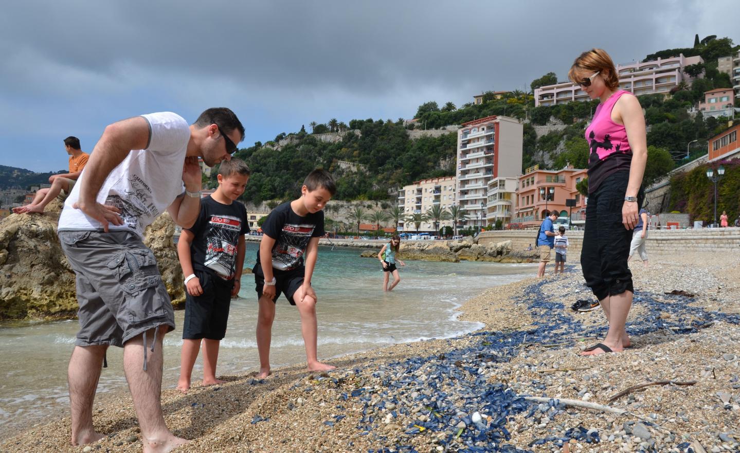 Des vélelles, qui ressemblent à s'y méprendre à des méduses, sont arrivées en masse sur la plage des Marinières, à Villefranche.