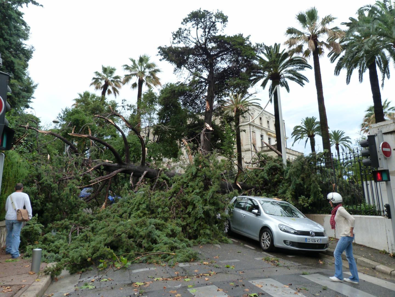Un arbre effondré dans le quartier Cimiez à Nice.