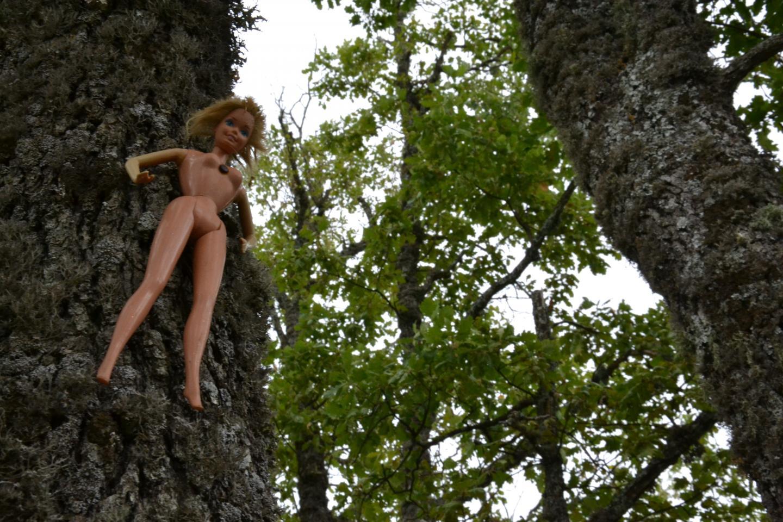 Des poupées ont été retrouvées clouées à des arbres du col de Vence.