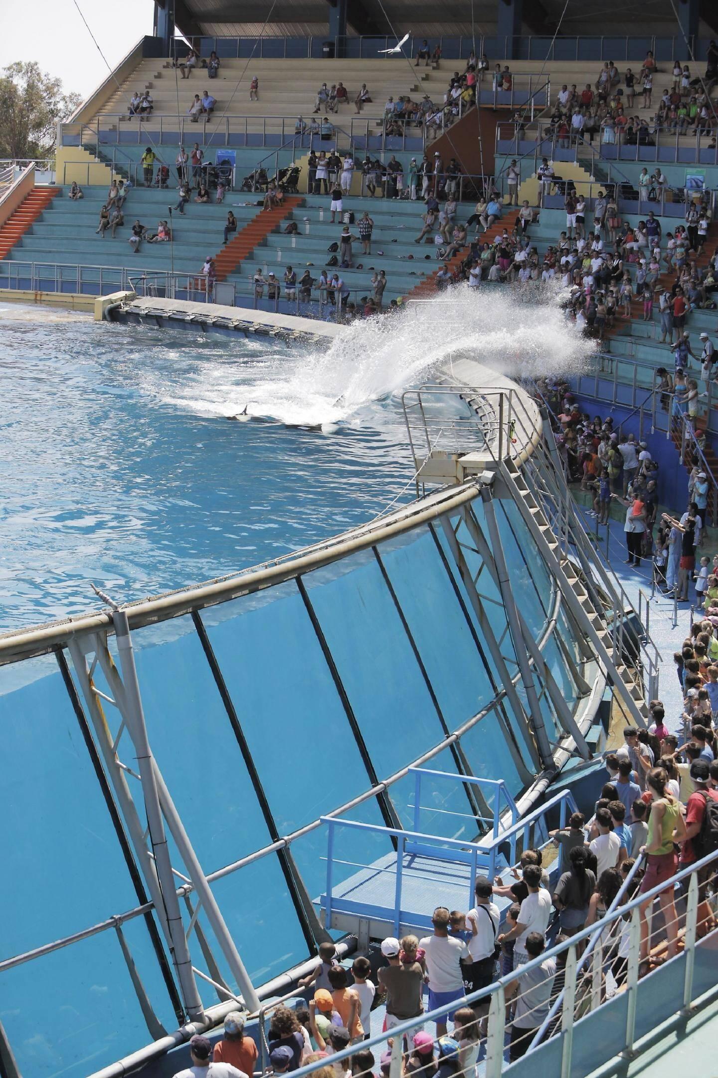 Créé en 1970 par Roland de la Poype, Marineland séduit notamment par ses spectacles aquatiques.