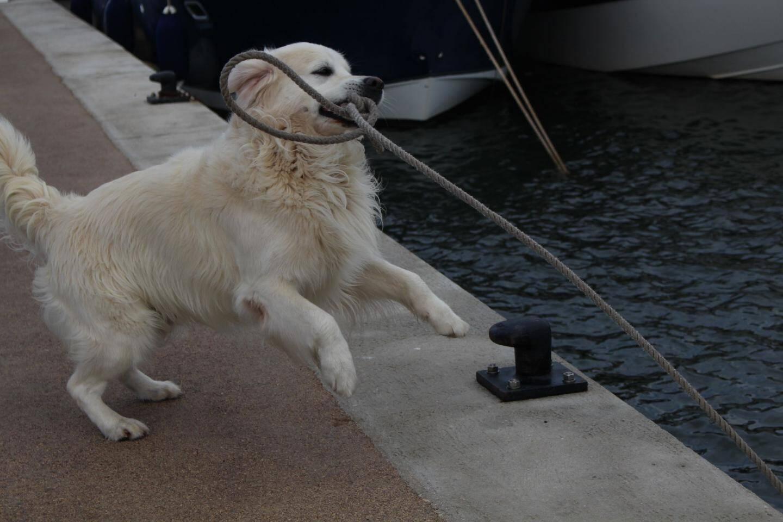 En quelques secondes, Matlo largue les amarres et rejoint son maître à bord. Rapide et efficace.