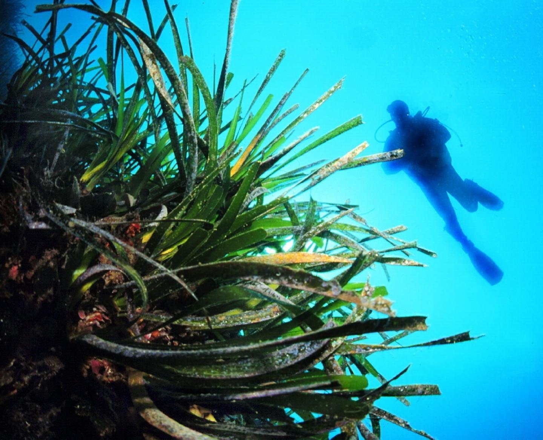 le SCoT de la mer entend définir des mesures de protection du milieu marin, préciser les vocations de l'espace marin et organiser les usages en mer, définir les conditions de développement des équipements industriels et portuaires, prendre en compte les relations réciproques de la terre à la mer.