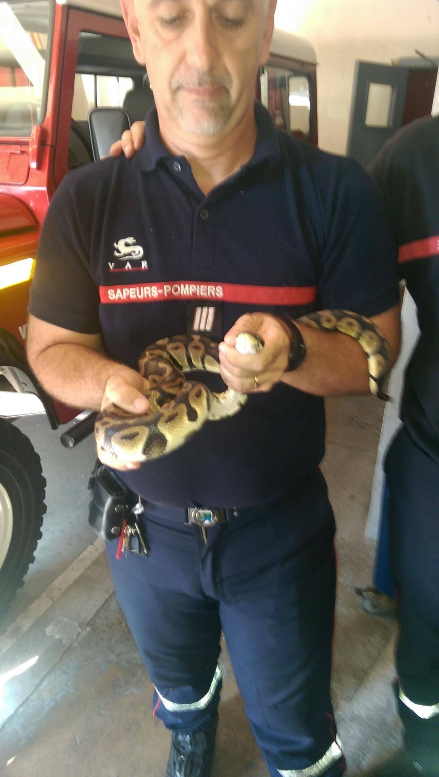 Au Beausset, « Papa python »  avait sauvé sa - 30097565.jpg