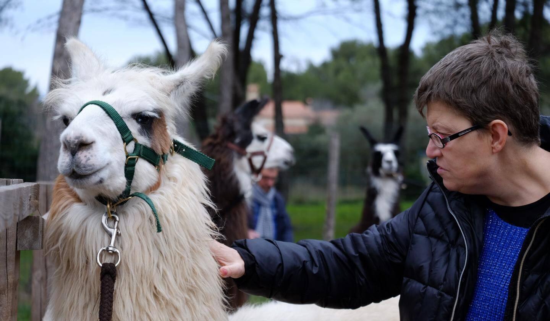 Au Corral des lamas de Six-Fours avec Benjamin Leroy-Blanc, éleveur de lamas et zoothérapeute