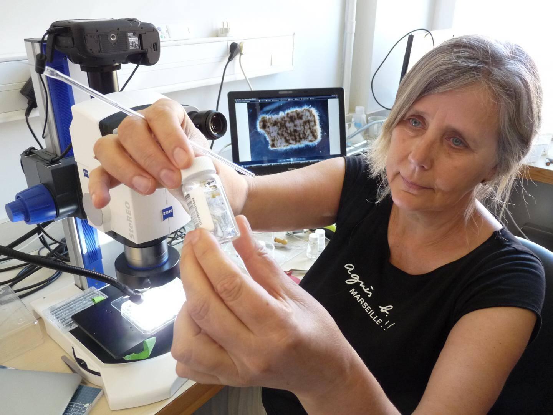 Maria Luiza Pedrotti, chercheur à l'Observatoire Océanologique de Villefranche sur mer
