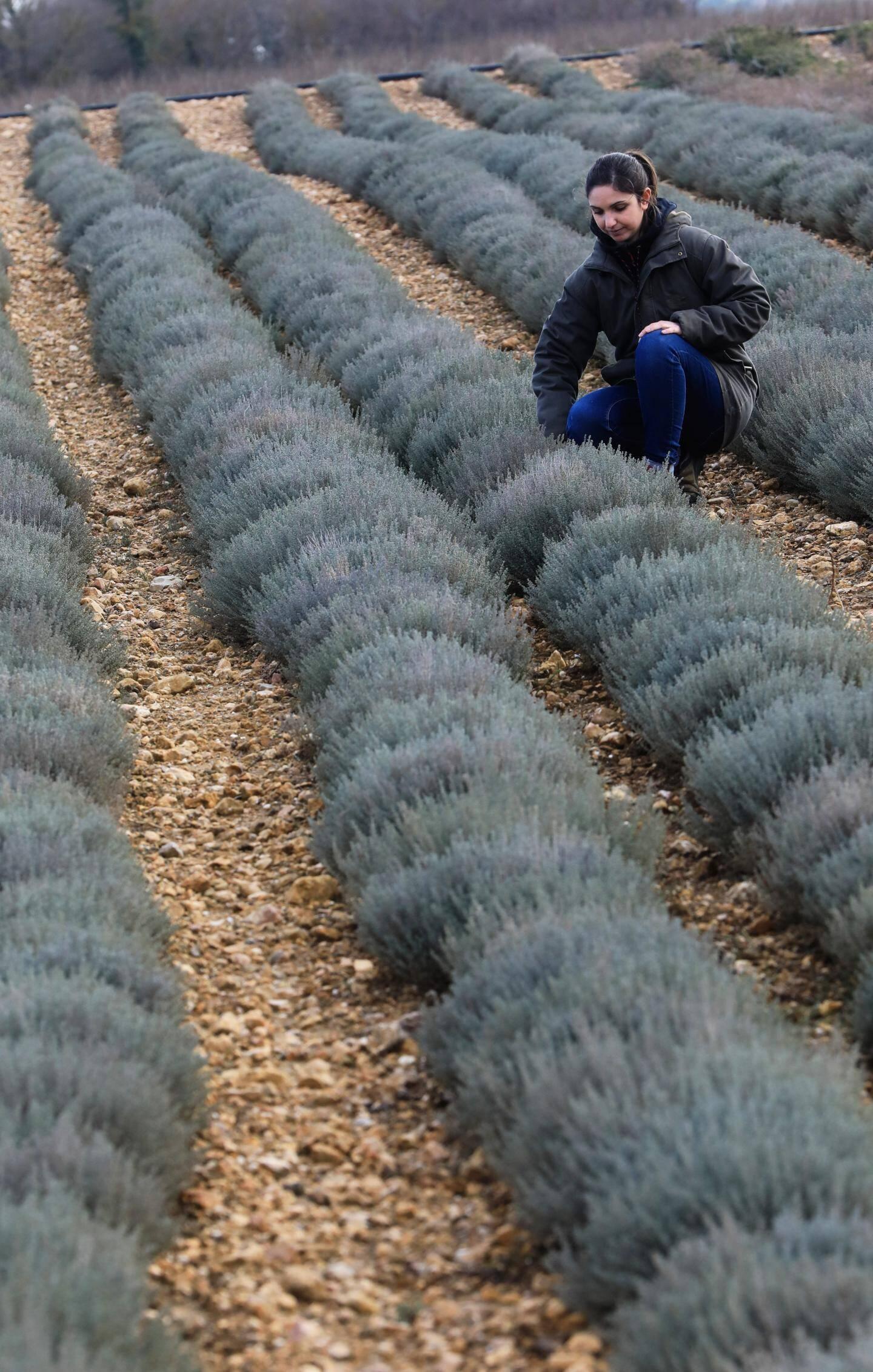 Planter, désherber, récolter, conditionner, vendre…