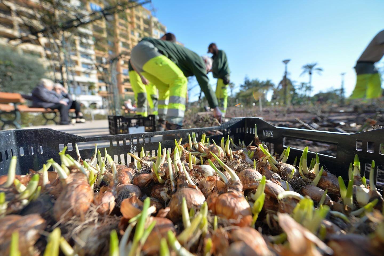 Plantation de 40000 bulbes dans les jardins de la Roseraie Princesse-Grace