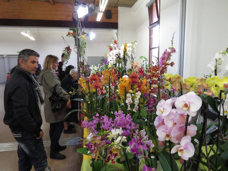 Outre les orchidées présentées sur la douzaine de stands des exposants, les visiteurs admireront aussi la reconstitution d'un parterre tropical.
