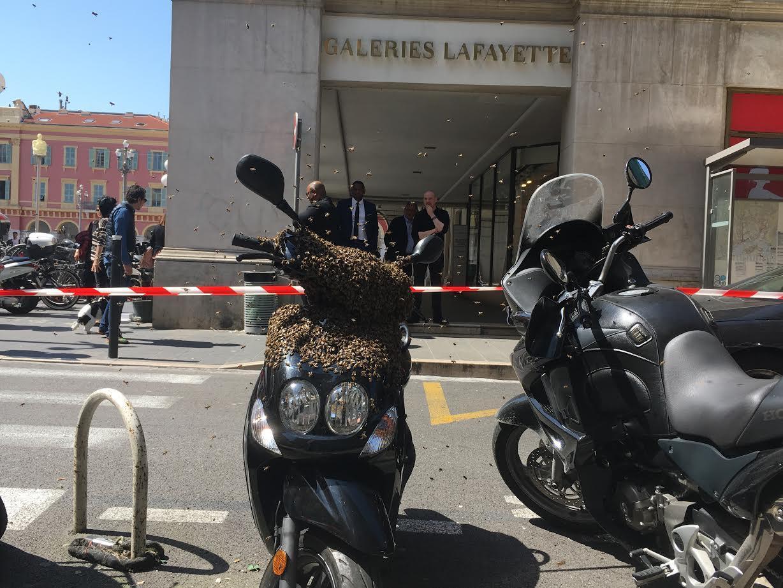 Un essaim d'abeilles en pleine rue, dans le centre de Nice.
