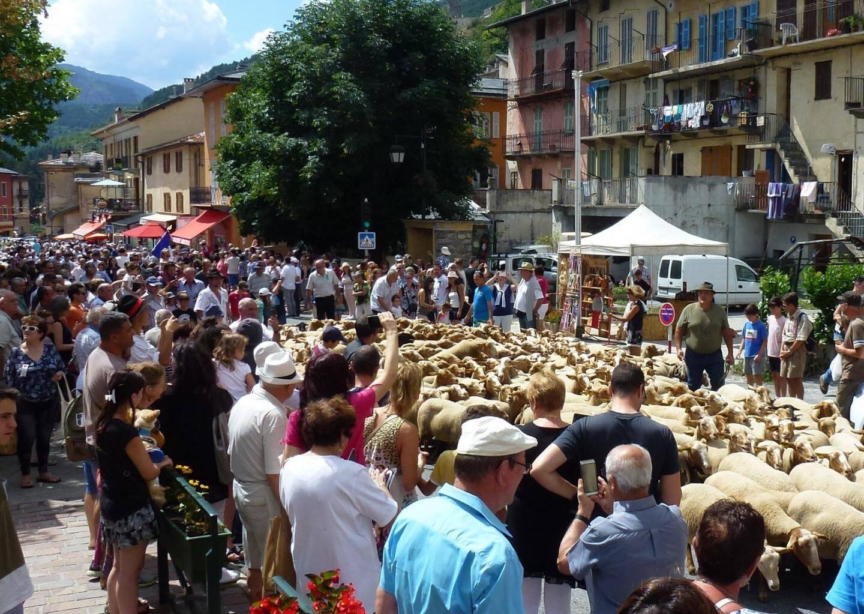 Un défilé de plus de 150 brebis dans les rues de Tende.