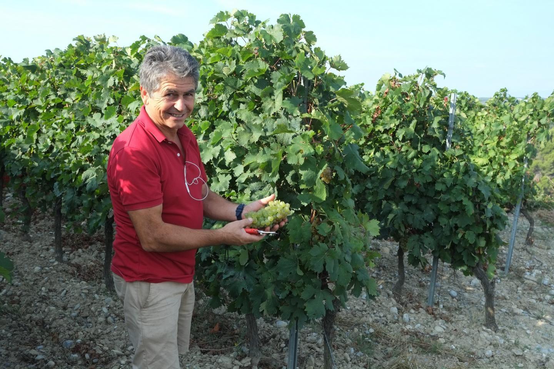 Jo Sergi, ici sur sa parcelle de la Tour avec ses équipes de vendangeurs, sera dans les vignes jusqu'à la mi-octobre.