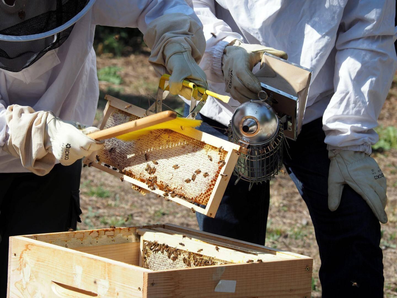 Allez ouste ! Du balai. Délicatement, il faut dégager les abeilles des rayons, sans les énerver.