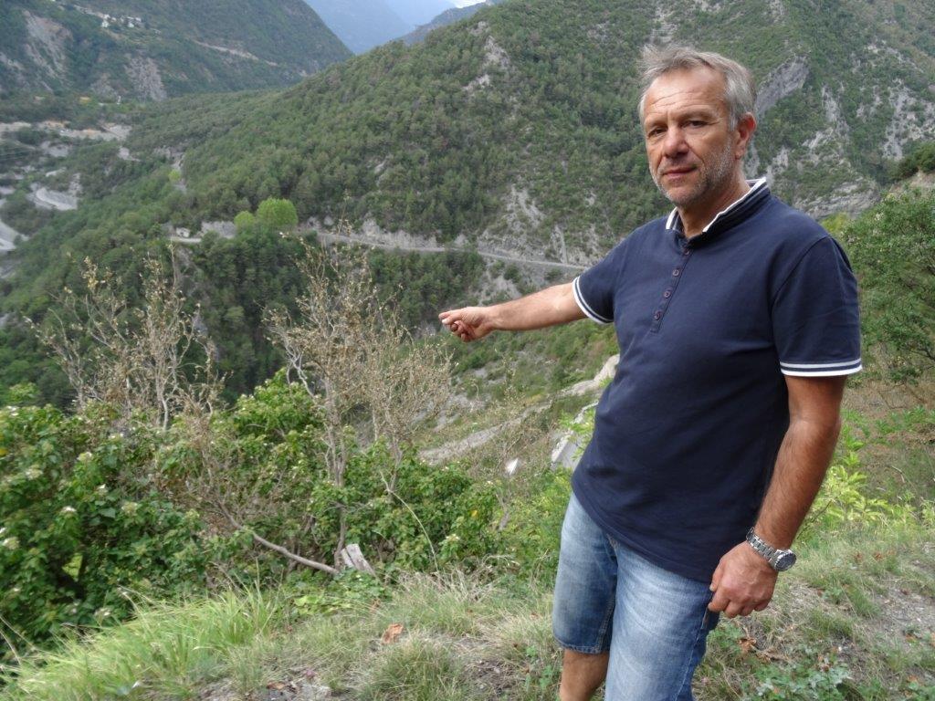 Le maire, Gérard Steppel, devant des buis étouffés par la colonisation de l'insecte.