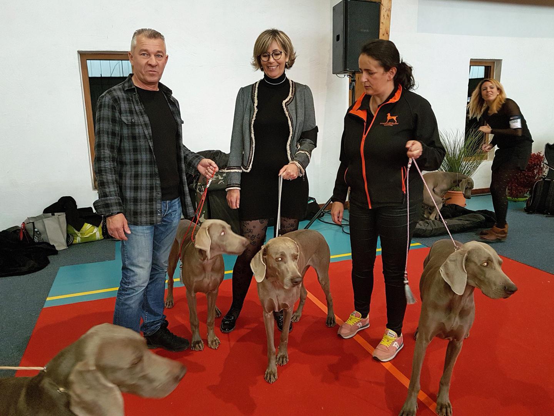 Des propriétaires et leurs chiens, des Braques de Weimar,  attendent avec anxiété  leur passage devant un juge.