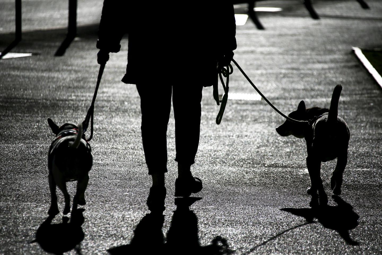 L'ombre de la déjection canine plane sur la ville…