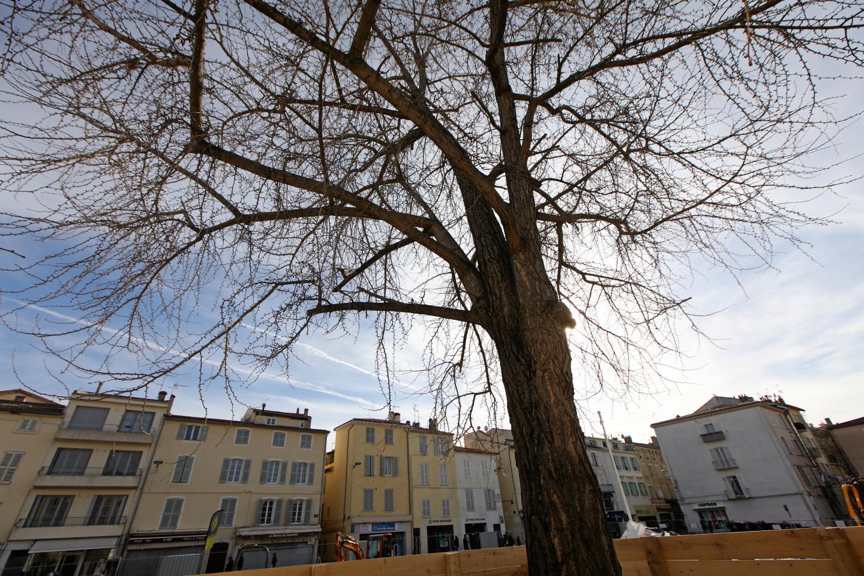 De gauche à droite et de haut en bas : le Gingko Biloba de la place des Martyrs, le Micocoulier de la place du Revely, celui de la place Aimé-Cesaire comme le chêne blance de l'avenue deLattre-de-Tassigny, pourraient être classés comme des arbres remarquables.