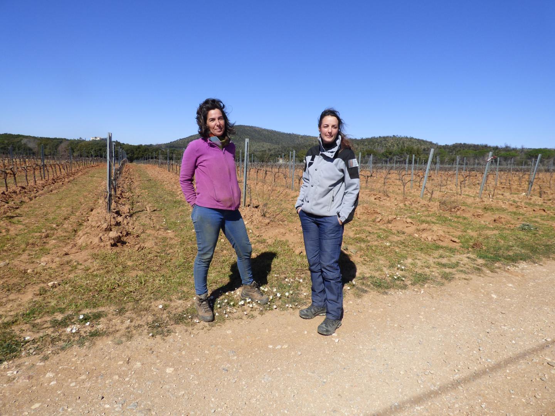 Lundi  matin, une spécialiste de l'ONCFS est venue constater les dégâts, au niveau du domaine vinicole près de Cabasson, où se trouvait le troupeau attaqué dans la nuit de samedi à dimanche.