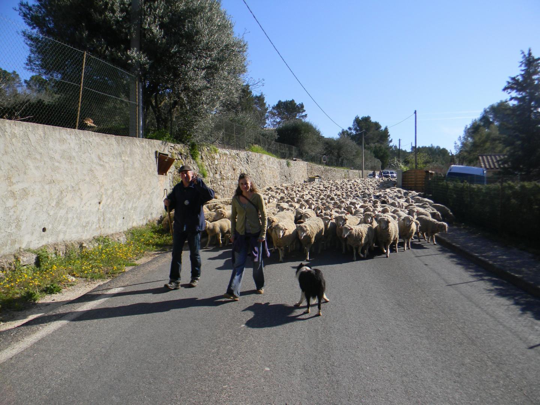 Mille moutons traversaient le village chaque année.