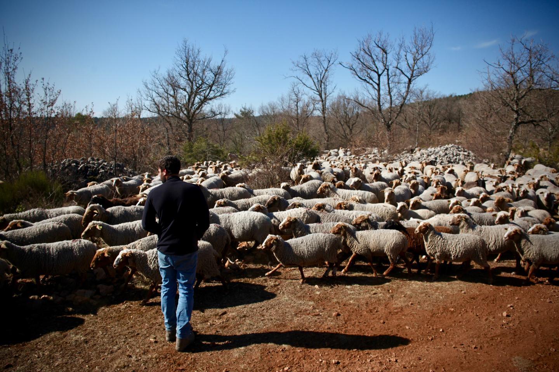 """Le pastoralisme à Canjuers représente """"un tiers de l'élevage varois"""""""