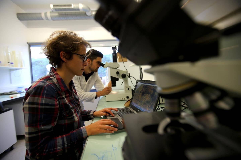 """Justine Lipuma: """"les champignons microscopiques multiplient de 100 à 1000 fois la surface d'échange entre la plante et le sol."""""""