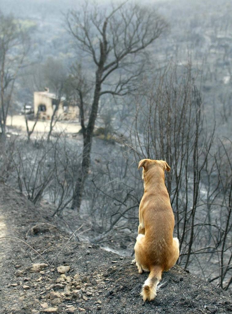 Après l'incendie, à Sainte-Maxime (Var) le 29 juillet 2003