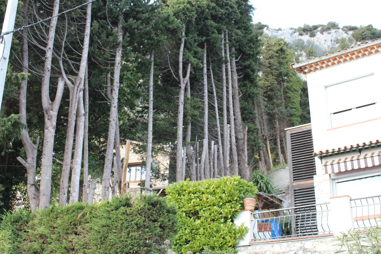 Avant la coupe, les cyprès mesuraient plus de vingt mètres de hauteur.  (DR)