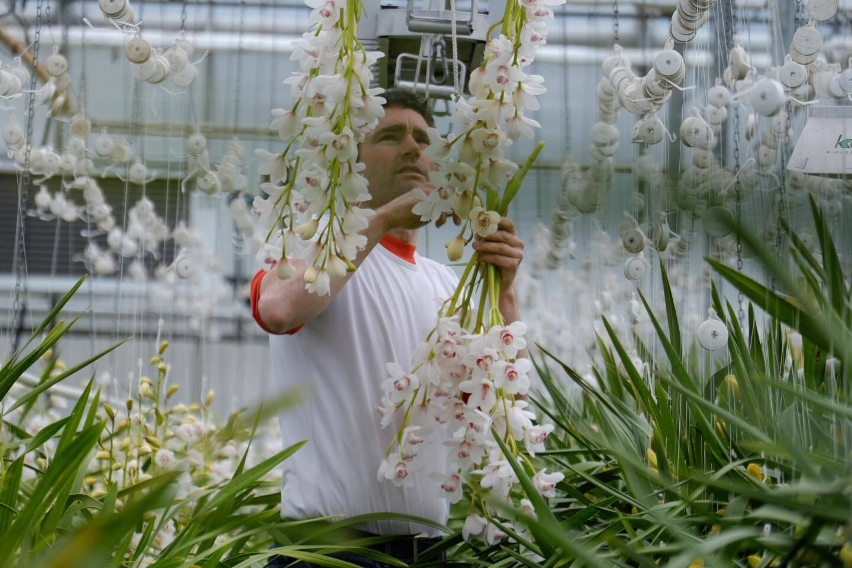 Floriculture à Hyères