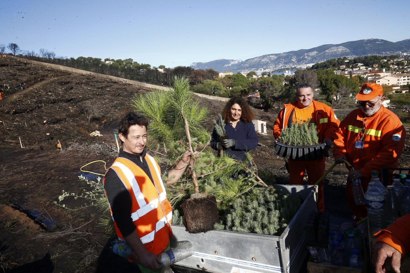 Pins et chênes verts ou liège ont été replantés sur des « sols propres  ».
