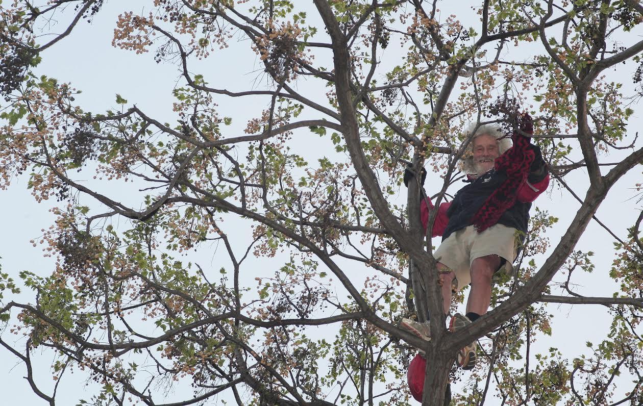 Dans son arbre au Ray, en 2011.