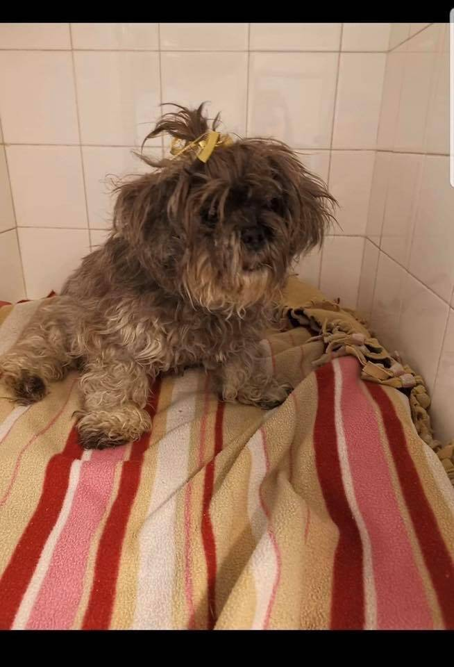 Trouvée alors qu'elle errait sur une plage de Juan-les-Pins, cette chienne âgée de quatorze ans a pu être recueillie grâce aux grands cœurs.
