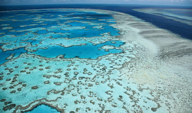 L'exposition proposera une plongée sous le plus vaste site corallien au monde : la Grande barrière située au nord de l'Australie.