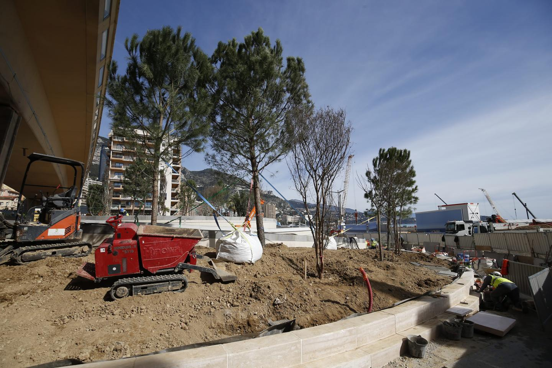 La plantation des arbres sur le rond-point du Portier a débuté le lundi 24 février et se poursuivait ce mardi.