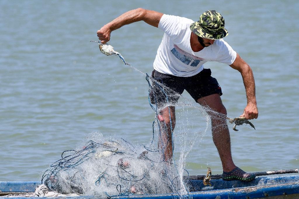 Adrian Kola, un pêcheur, retire des crabes bleus de son filet sur la rivière du village d'Adriatik, près du lagon de Divjakë en Albanie le 24 juillet 2020