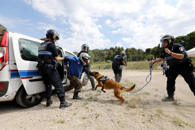 La puissance d'attaque du jeune malinois est telle que le maître-chien, jouant le cobaye délinquant, est systématiquement déséquilibré et mis à terre.