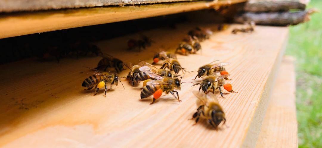 """«On dit que quand une ruche est saine, elle est plus aseptisée qu'un bloc opératoire."""""""