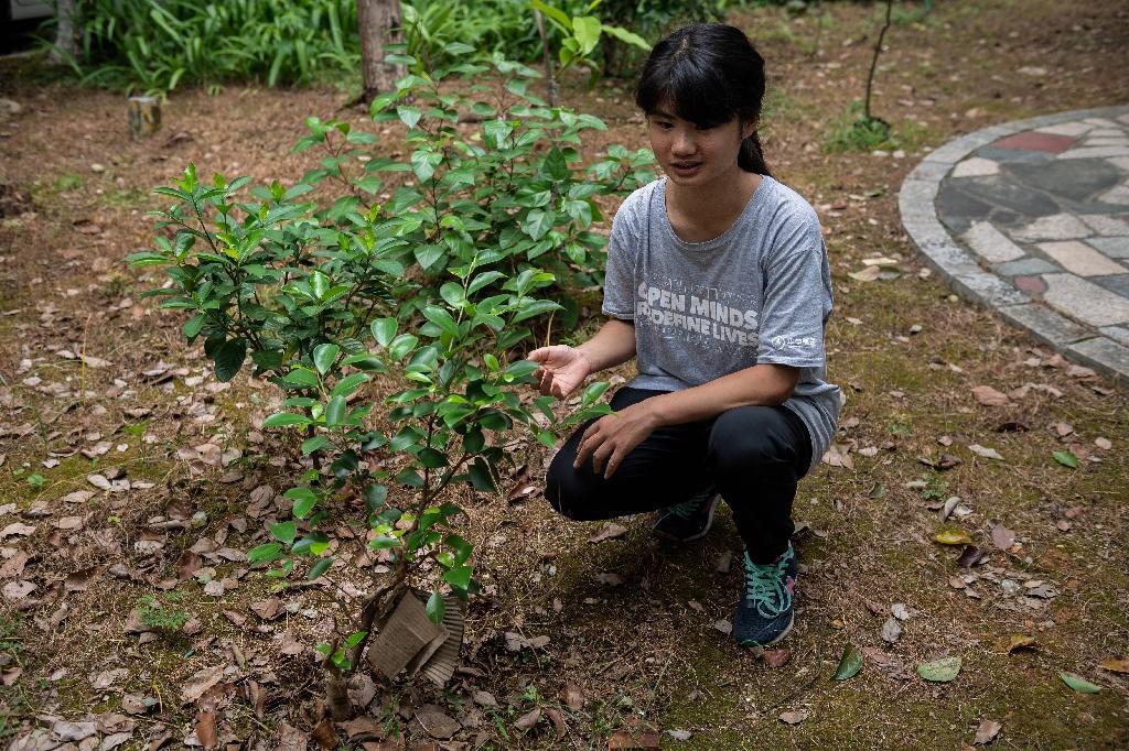 La militante écologique Howey Ou près d'un arbre qu'elle a planté devant la maison familiale à Guilin (Chine), le 7 août 2020