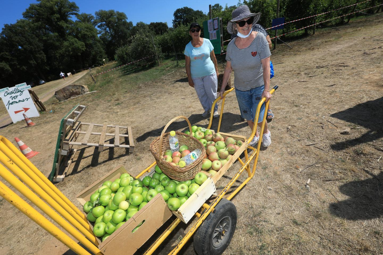 La cueillette des pommes à plusieurs , c'est toujours mieux.