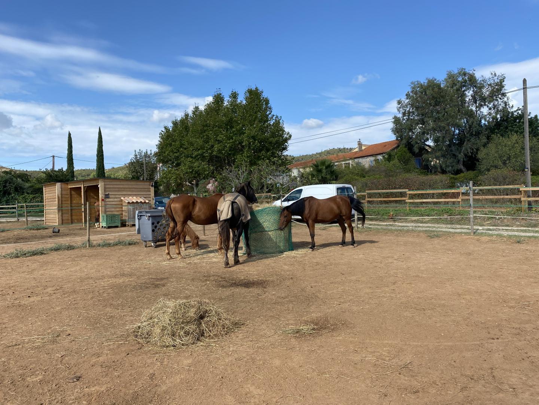 Les chevaux de l'écurie de la Mozerolle, à la Londe, sont désormais tous regroupés dans un seul et même paddock.