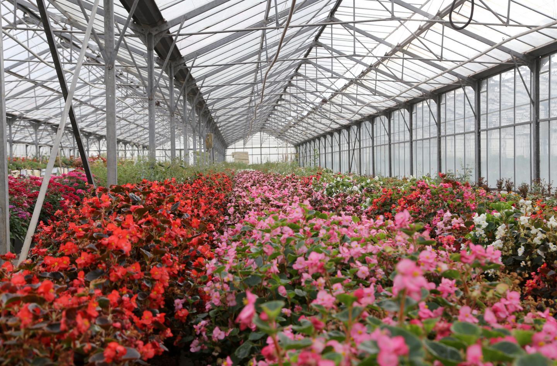 L'entreprise cultive des fleurs sur cinq hectares en plein champ et cinq hectares de serres à Hyères, sur la route des Loubes, et loue d'autres serres à La Farlède.
