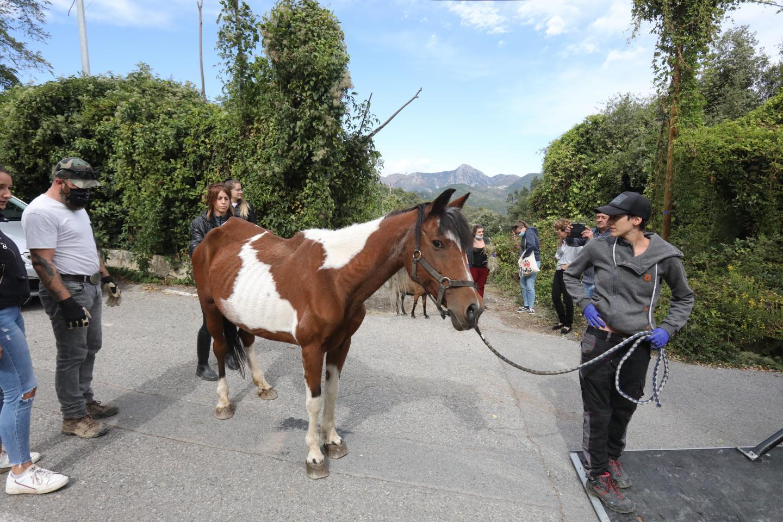 Les chevaux étaient très amaigris, les poules anémiées.