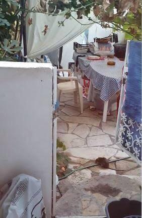 Des habitants retrouvent des rats sur leur terrasse.