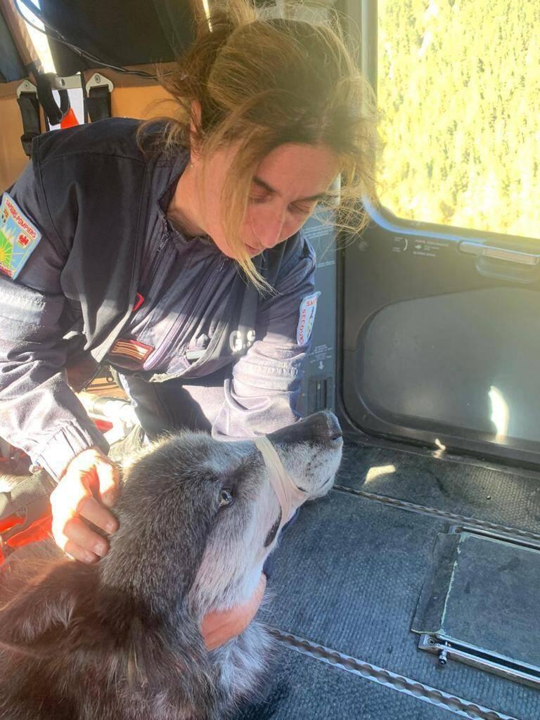 Véronique Viennet, chef vétérinaire du SDIS 06, a participé à la capture de Drakkar, un loup noir du Canada, échappé du parc Alpha.