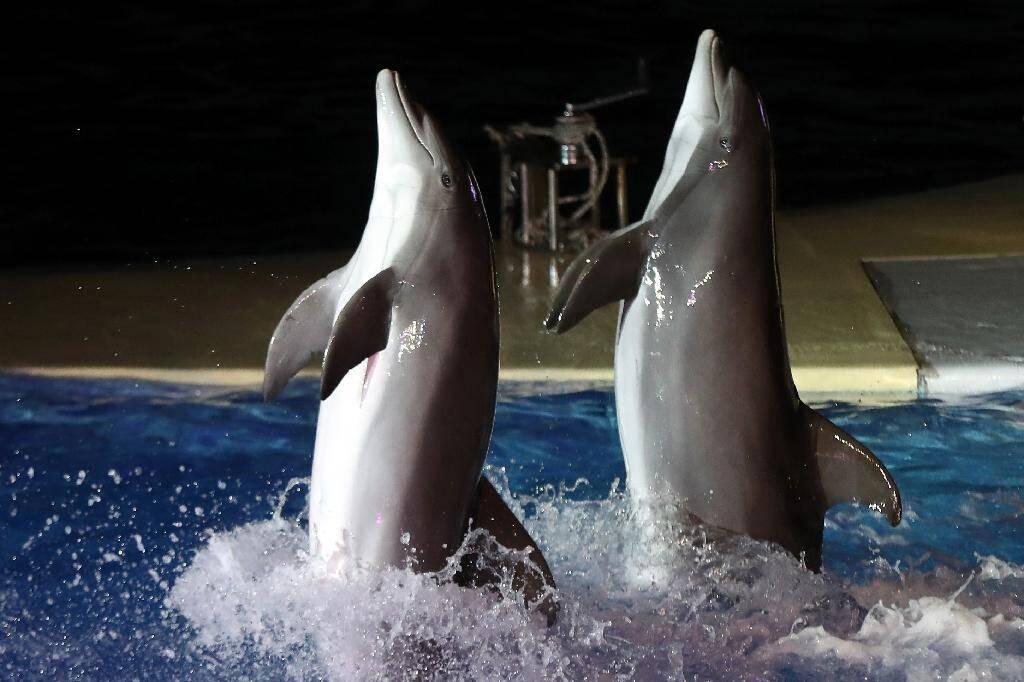 Spectacle de dauphins au Marineland d'Antibes dans les Alpes-Maritimes le 7 décembre 2016
