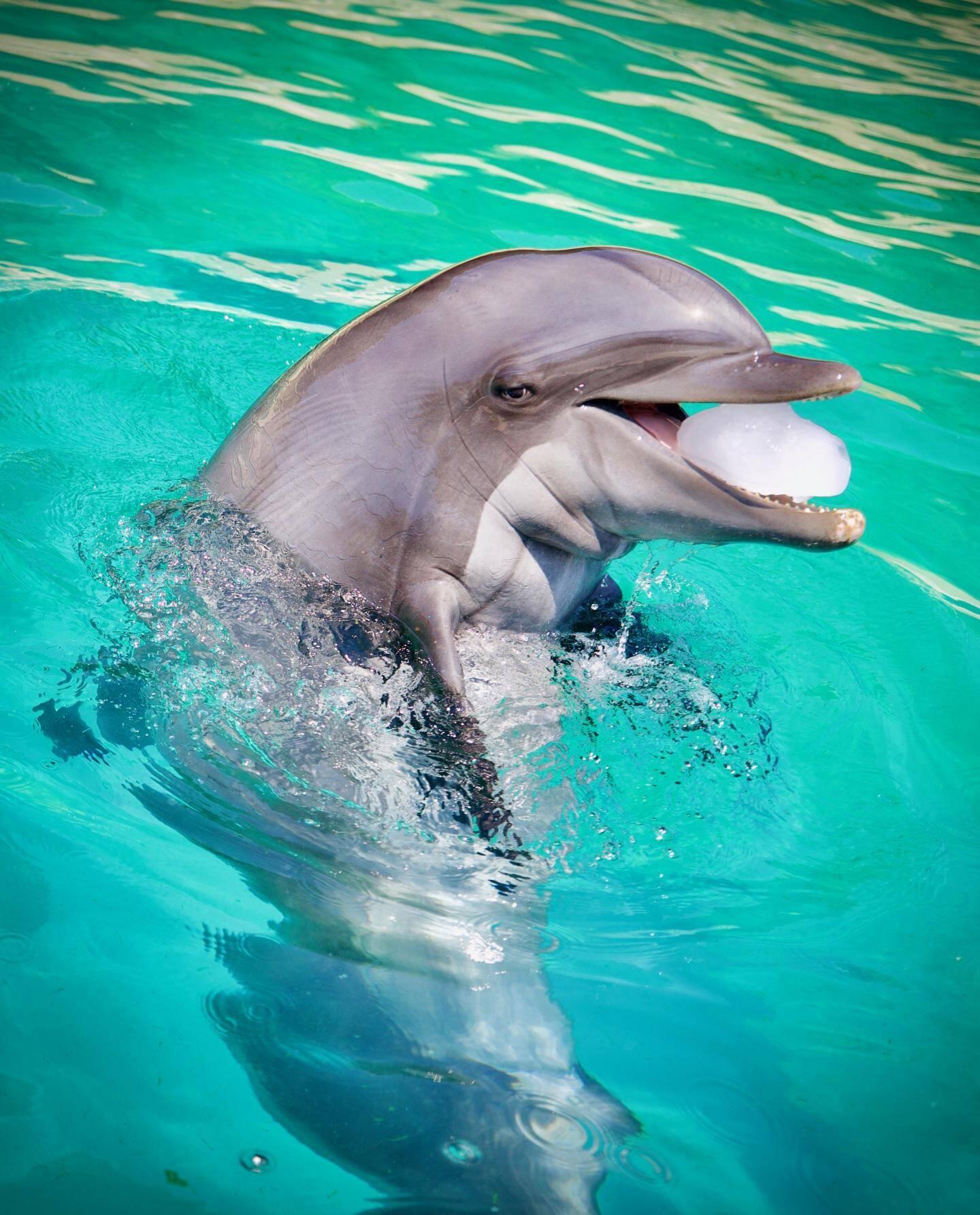 Les dauphins seront interdits dans les parcs à partir de 2027.