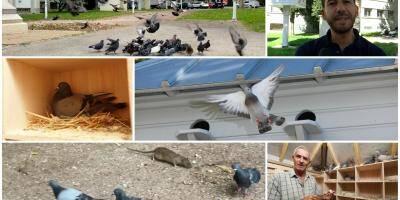 VIDEO. Toulon teste le pigeonnier contraceptif