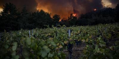 En Californie, les célèbres vignobles de la Napa Valley en proie aux flammes