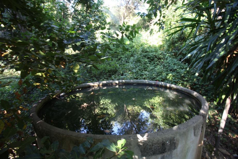 Situé sur un terrain à l'abandon entouré d'habitations, cet ancien bassin qui servait autrefois de réserve pour arroser les jardins est un vrai paradis pour les larves de moustiques qui prolifèrent. Mais ça l'est moins pour les riverains, comme nous pouvons en témoigner lors d'un passage de quelques minutes seulement (le temps d'une photo) qui nous a valu une bonne dizaine de piqûres. (Photo Philippe Lambert)