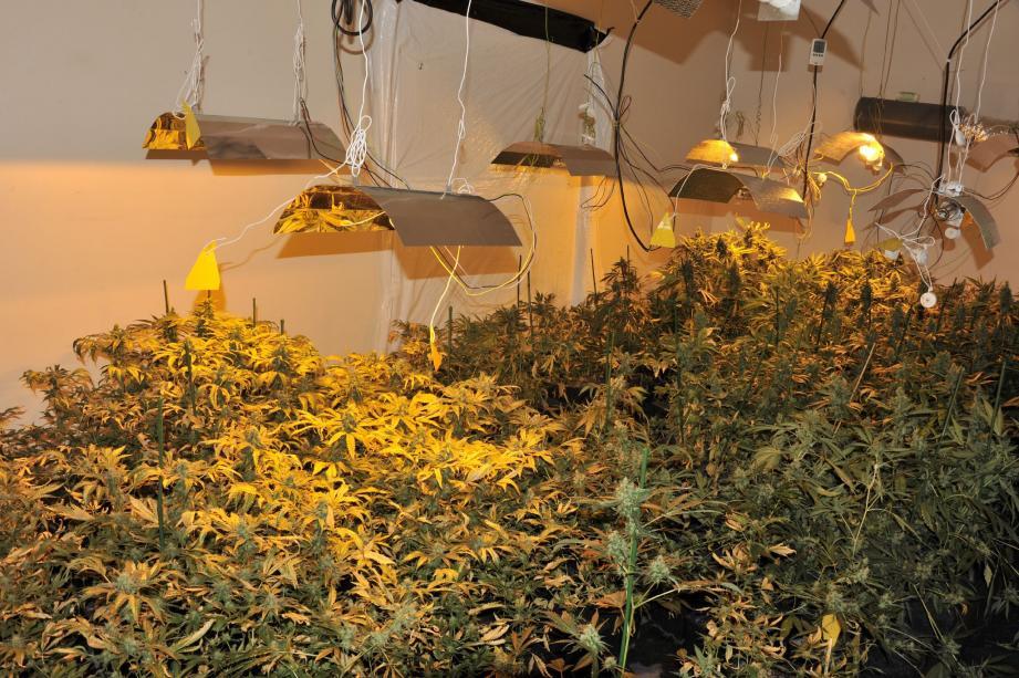 La culture du cannabis prospérait dans cet appartement niçois. L'odeur a alerté les voisins.(Photo DR)