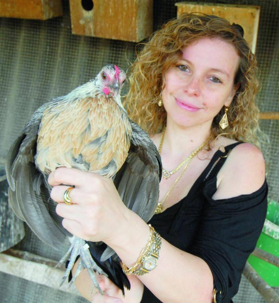Cette poule phœnix, retrouvée en boule et les plumes gonflées, est la seule poule à avoir survécu à l'attaque.(Photo Xavier Giraud)